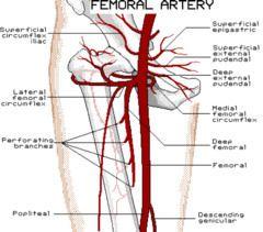 sfa (superficial femoral artery) | trauma registrar anatomy pics, Cephalic Vein