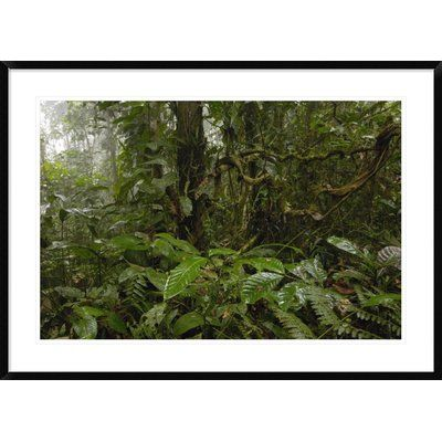 """Global Gallery 'Primary Rainforest' Framed Photographic Print Size: 30"""" H x 42"""" W x 1.5"""" D"""