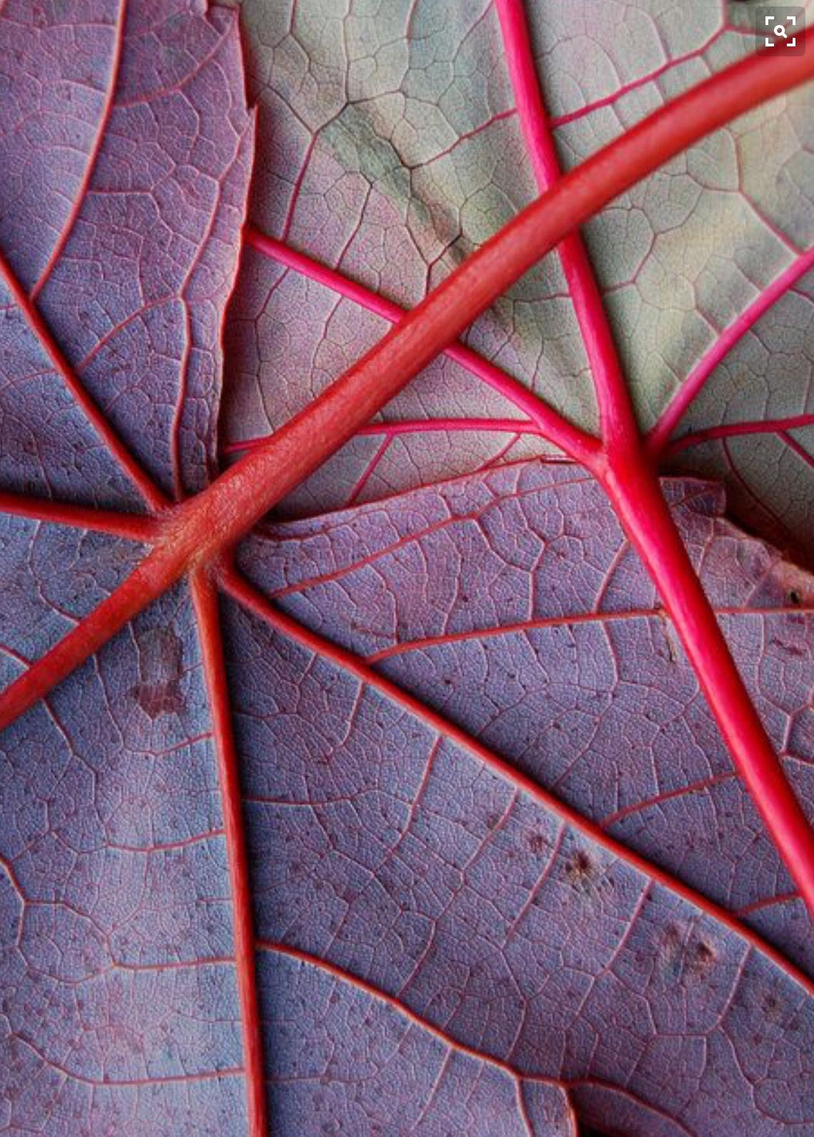 Colors Patterns In Nature Textures Patterns Nature Art