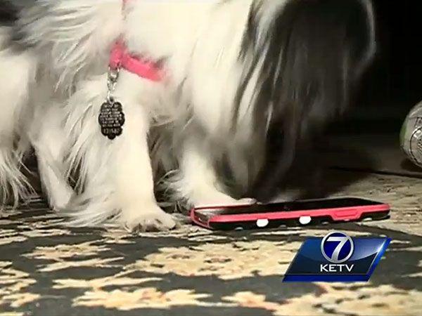 A dog calls 911!