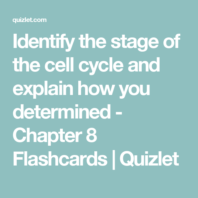 Identify the stage of the cell cycle and explain how you determined ...