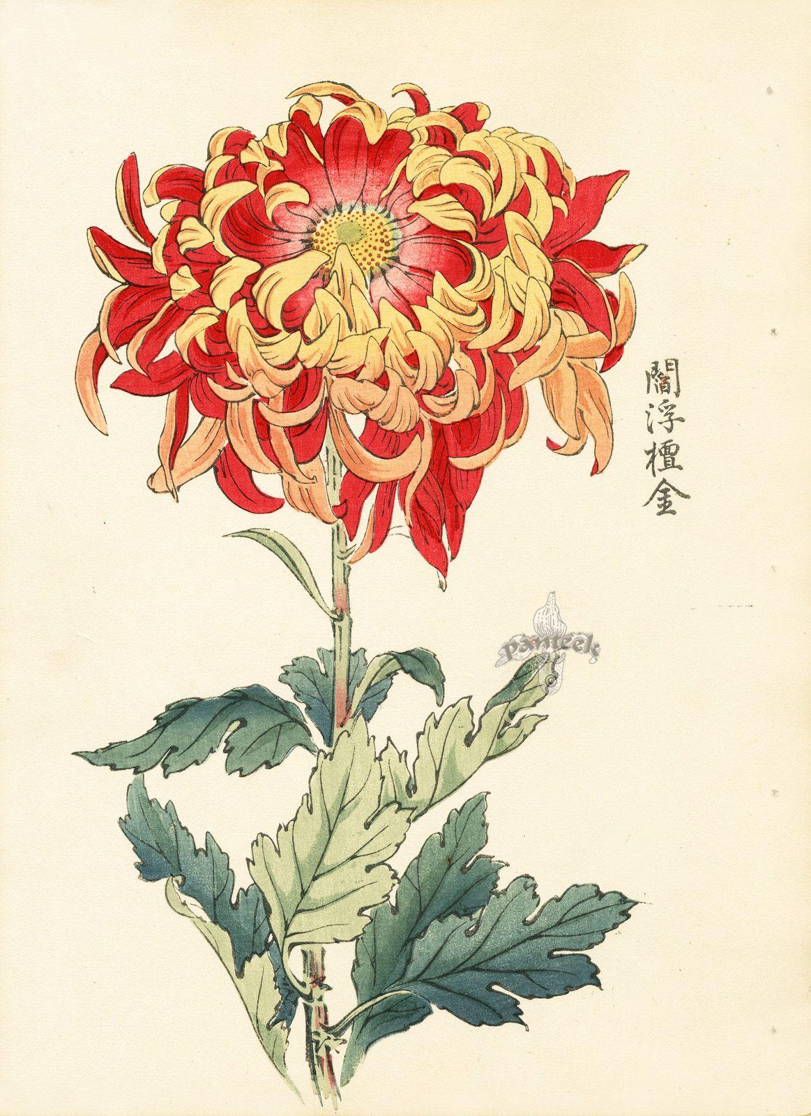 Keika Hasegawa Chrysanthemum Wood Block Prints 1893 Ilustracion Japonesa Arte Japones Arte De Ilustracion