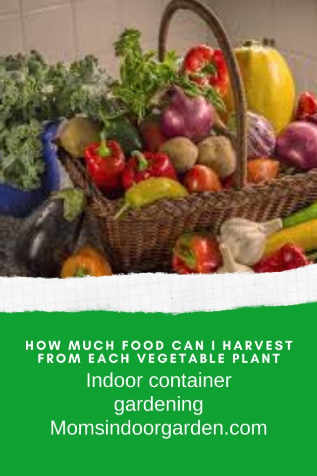 How much can I harvest from container vegetables? How much ...