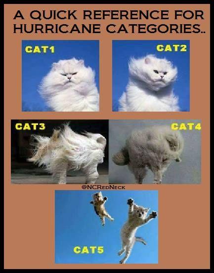 Image result for cat hurricane meme