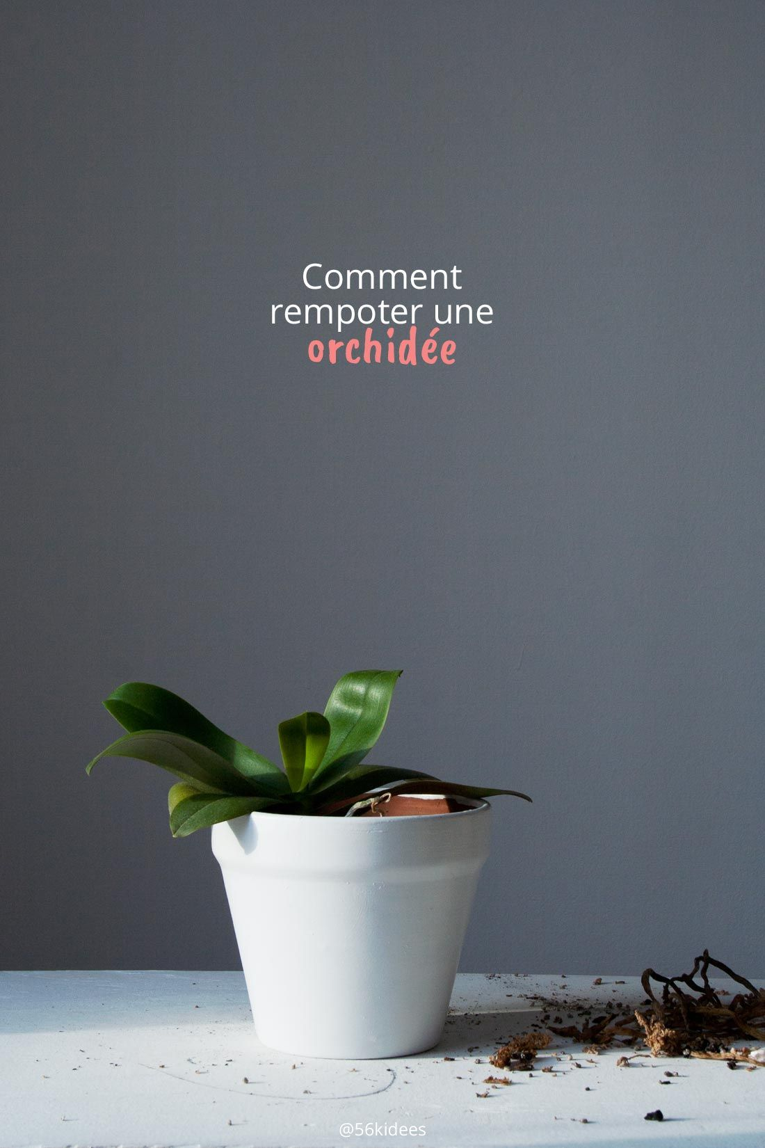 Comment Rempoter Une Orchidee Rempoter Orchidee Orchidee Et