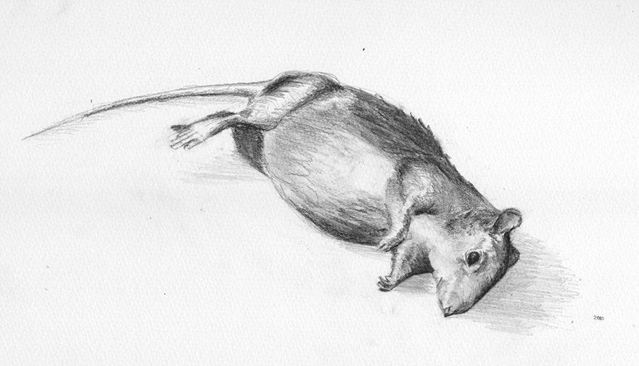mice drawings - Google Search