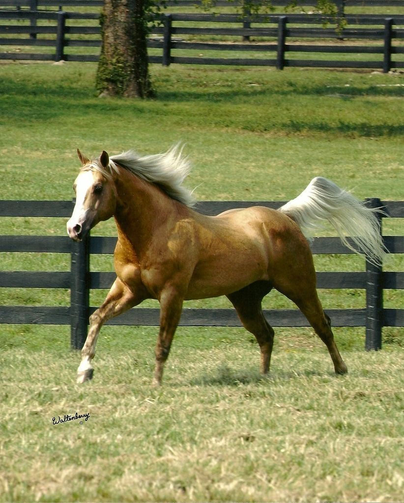Nu Chex To Cash - NRHA Hall Of Fame | Reining Horses ...