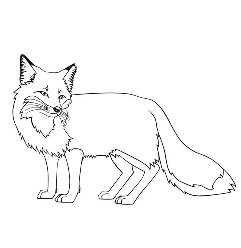 Fox coloring pages free printable http procoloring com fox coloring pages free printable