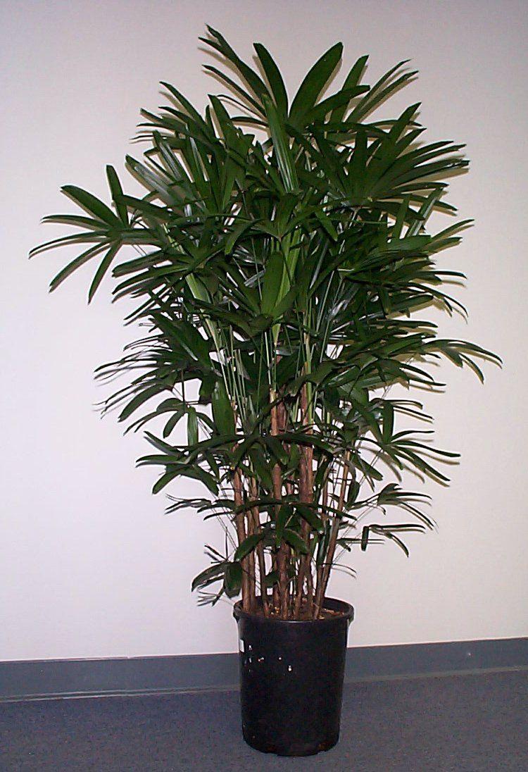 Best Kitchen Gallery: Exotic House Plants Exotic House Plants Raphis Gardening of Tree House Plant Names on rachelxblog.com