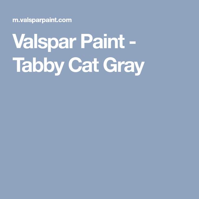Valspar Paint Tabby Cat Gray Tabby cat, Tabby, Valspar