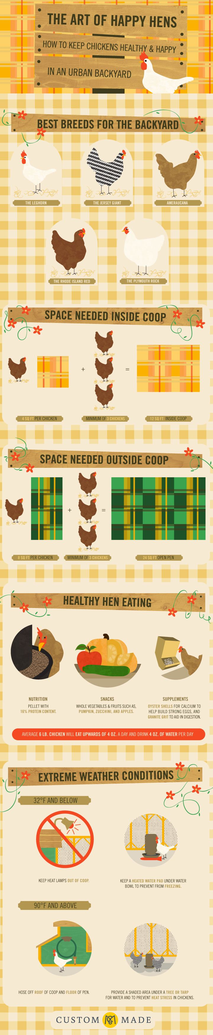 Keeping #chickens Healthy And Happy In An Urban Backyard.  Infographic