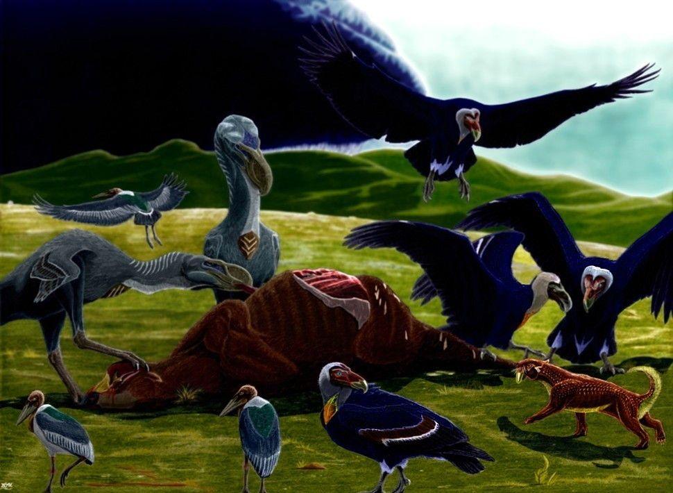 Art illustrations, Florida and Flightless bird on Pinterest