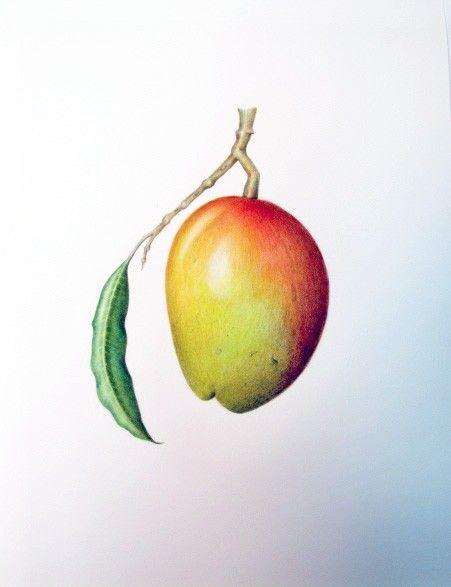 Original Mango Fruit Giclee Botanical by GalleryBotanica on Etsy