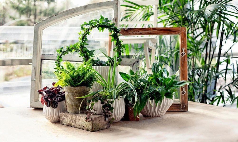 Växtbelysning – hjälp växterna på vintern | Växter