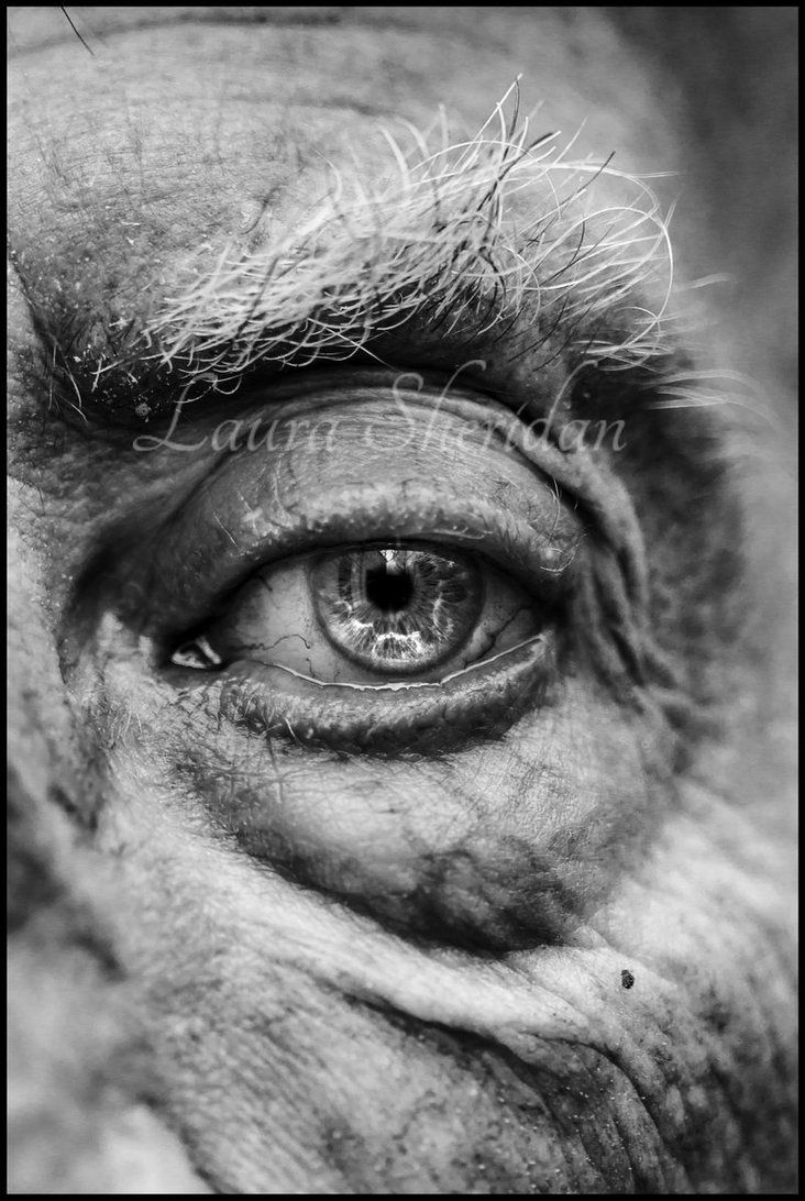 Eye Pencil Drawing Black And White Photography