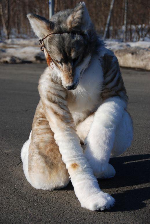 Bildresultat För Realistic Fursuits Fυяѕυιтѕ Wolf Fursuit