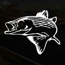 Large striped bass decal are