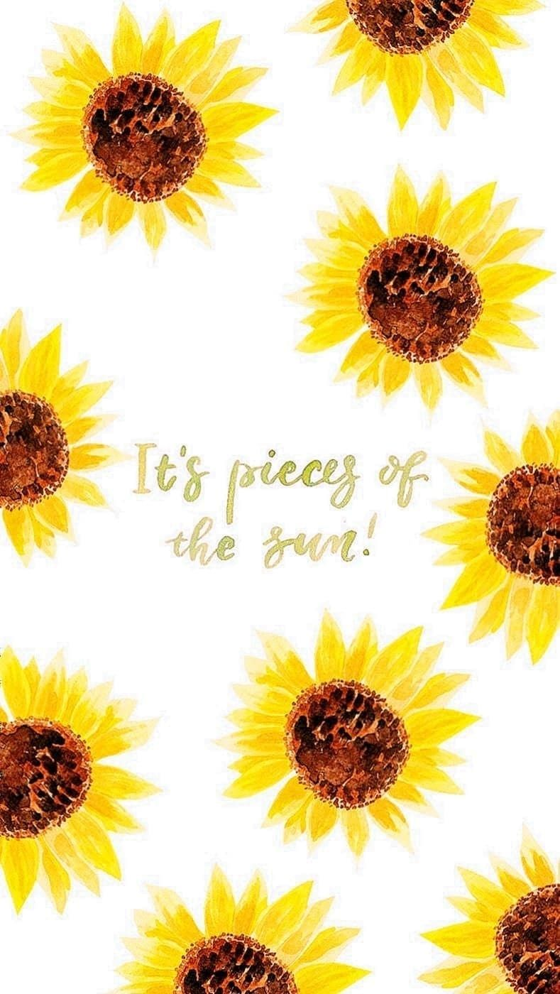 Sunflower Desktop Wallpapers Pinterest Sunflower