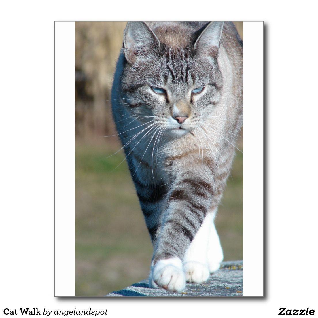 Cat Walk Postcard Cats, Cat walk, Cat illnesses