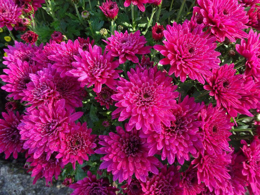 fleurs sous la pluie de novembre