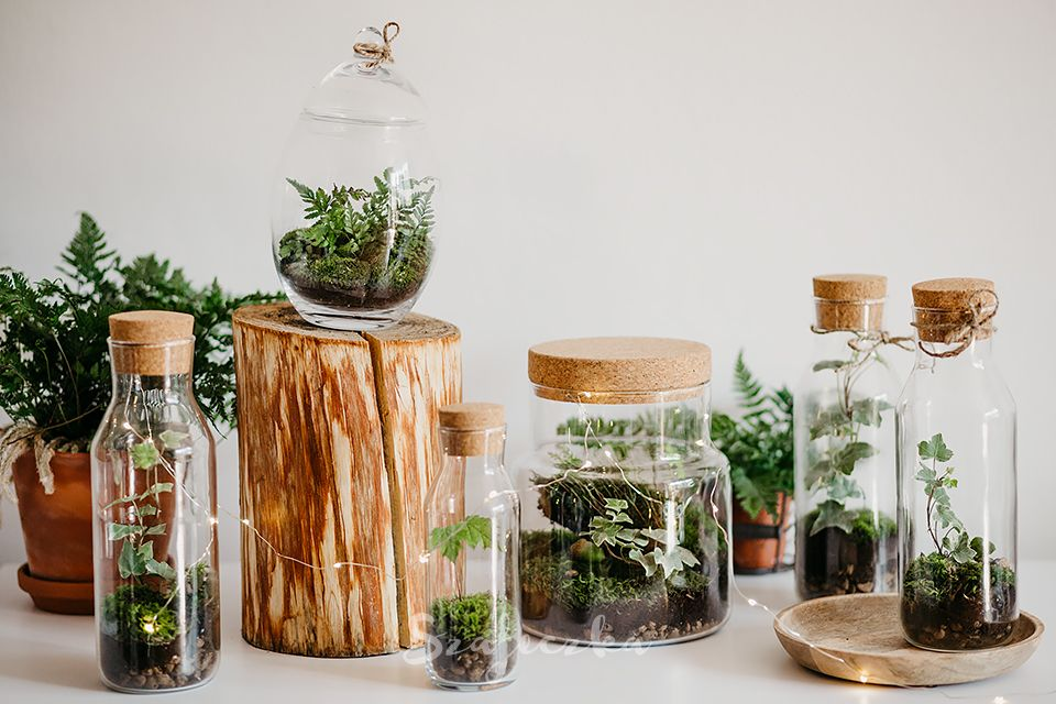 Jak Zrobic Las W Sloiku Butelce Karafce Szafeczka Com Succulent Terrarium Home Decor Decor