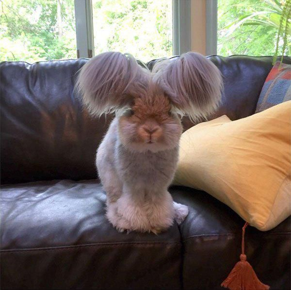 Cute Overload ‏@CuteOverload  It's Bunday