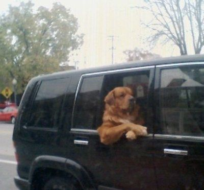 #Dogs looking like people