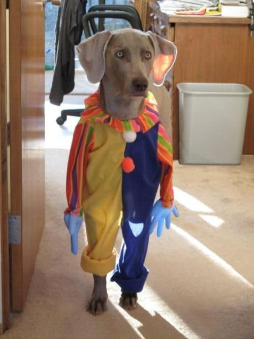 Standing Clown Dog Halloween Pet Costumes Dog Costumes