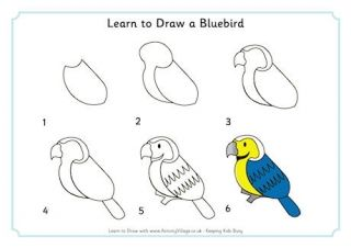 Learn to Draw a Bluebird