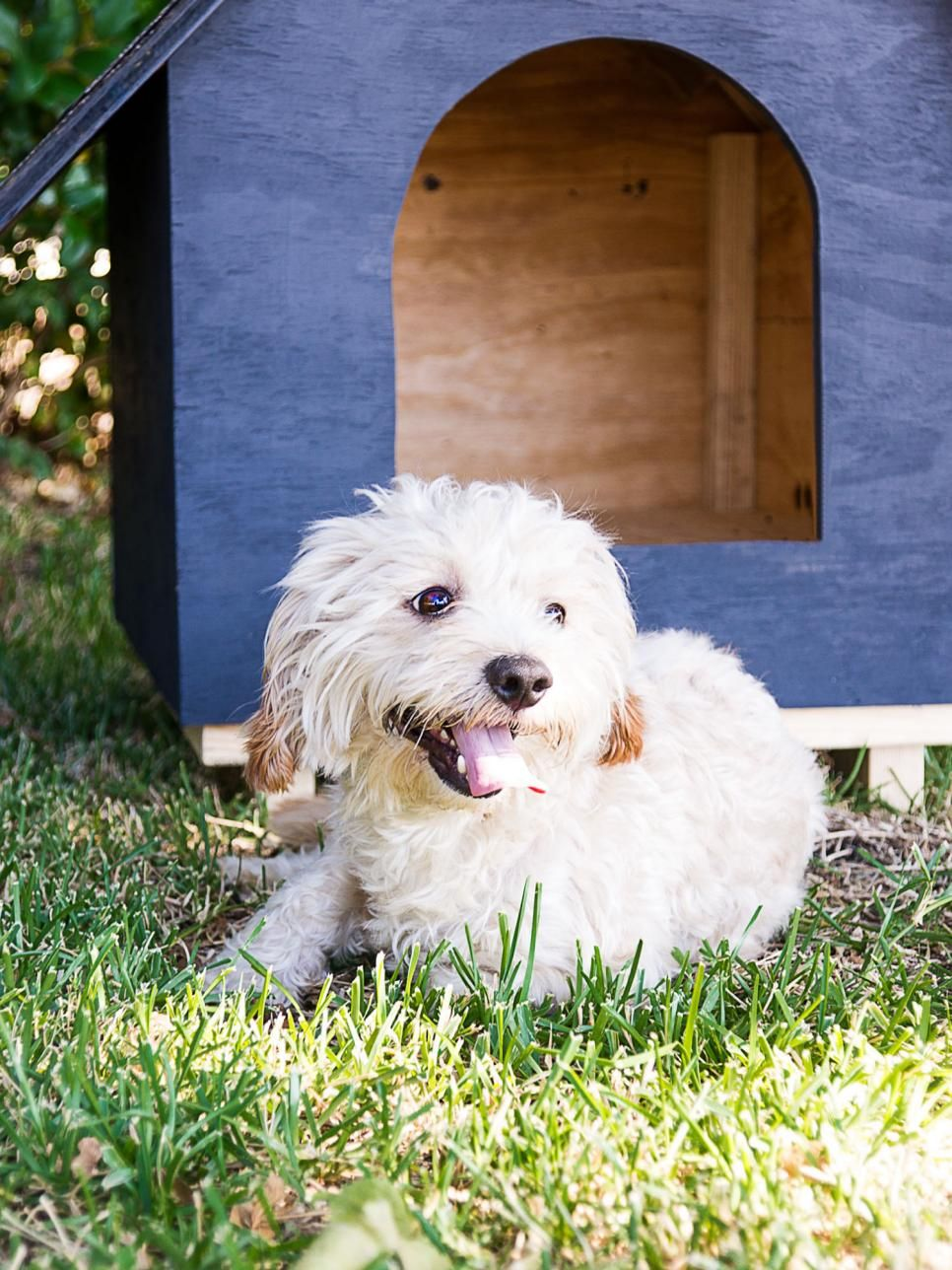 How To Build A Dog House Cat House Diy Dog Houses Build A Dog