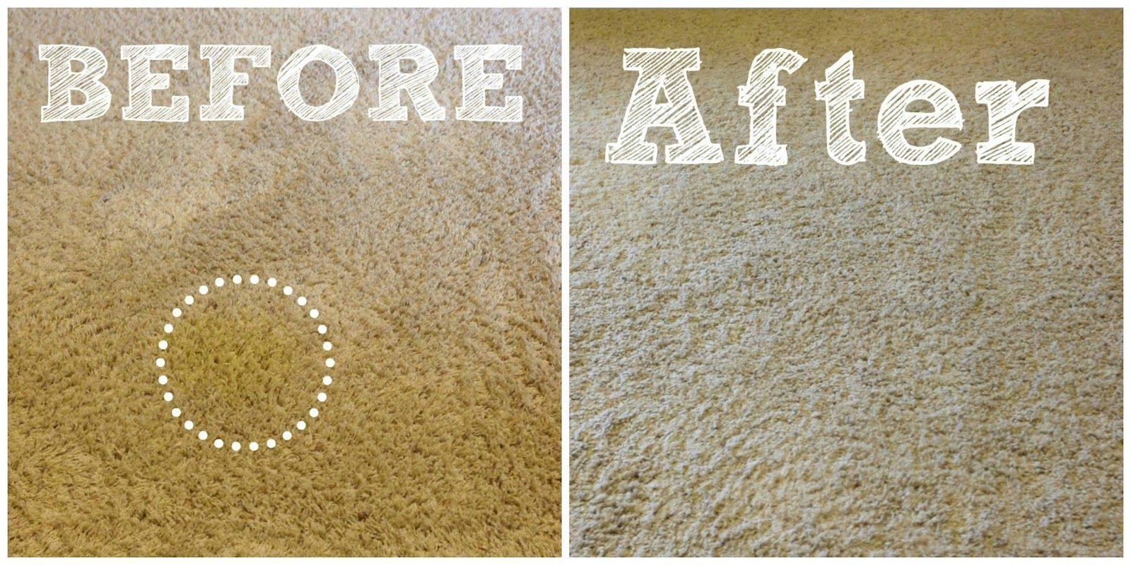 How To Get Rid Of Pet Stains On Carpet Remove