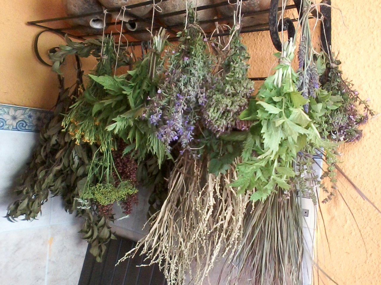 Hierbas aromáticas y florales secándose.....