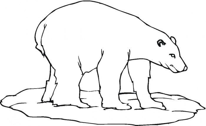 Polar Bear 23 Coloring Page From Polar Bears Category. Select From 28431  Printable Crafts Of Cartoons, Nature, Animals, Bible And Many More.