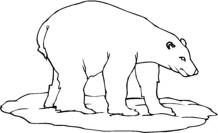 Polar Bear Colouring In Polar Bear Coloring Page Bear Coloring