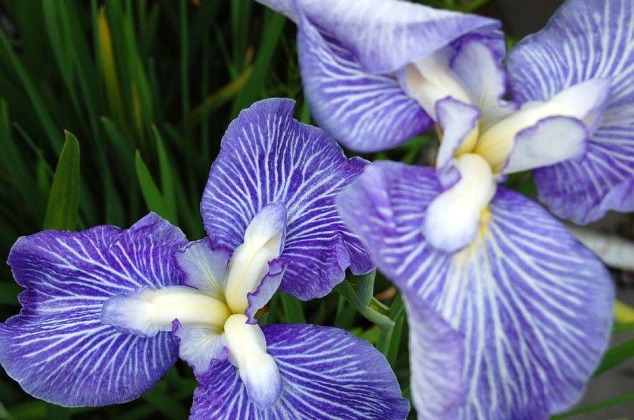 Fotos de flores preciosas bonitas hermosas Galeras de Fotos