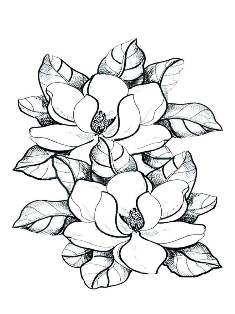 Magnolia Flower Coloring Pages 2 By Deborah Flower Coloring