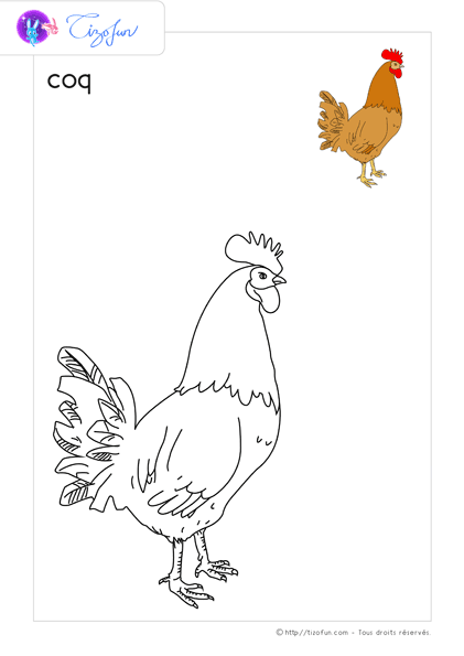Animaux Ferme Dessin A Colorier Coq Coloriage 43 Rooster Animals