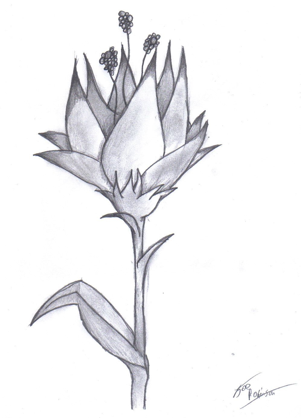 Pencil Drawing Of A Flower | Amazing Pencil Drawings Flowers ...