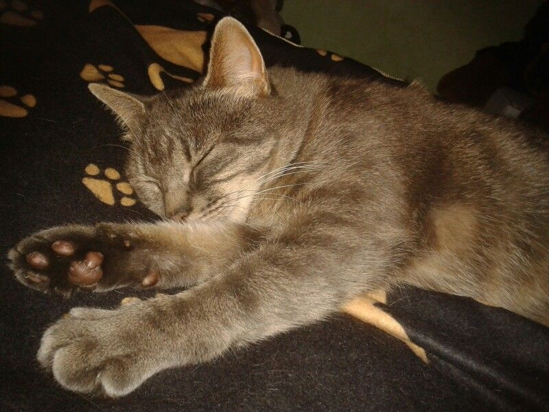 Jazza sleeps... <3 >^..^< XOXO