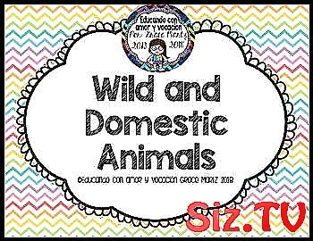 Wild or Domestic Animals Hi    This mini package i