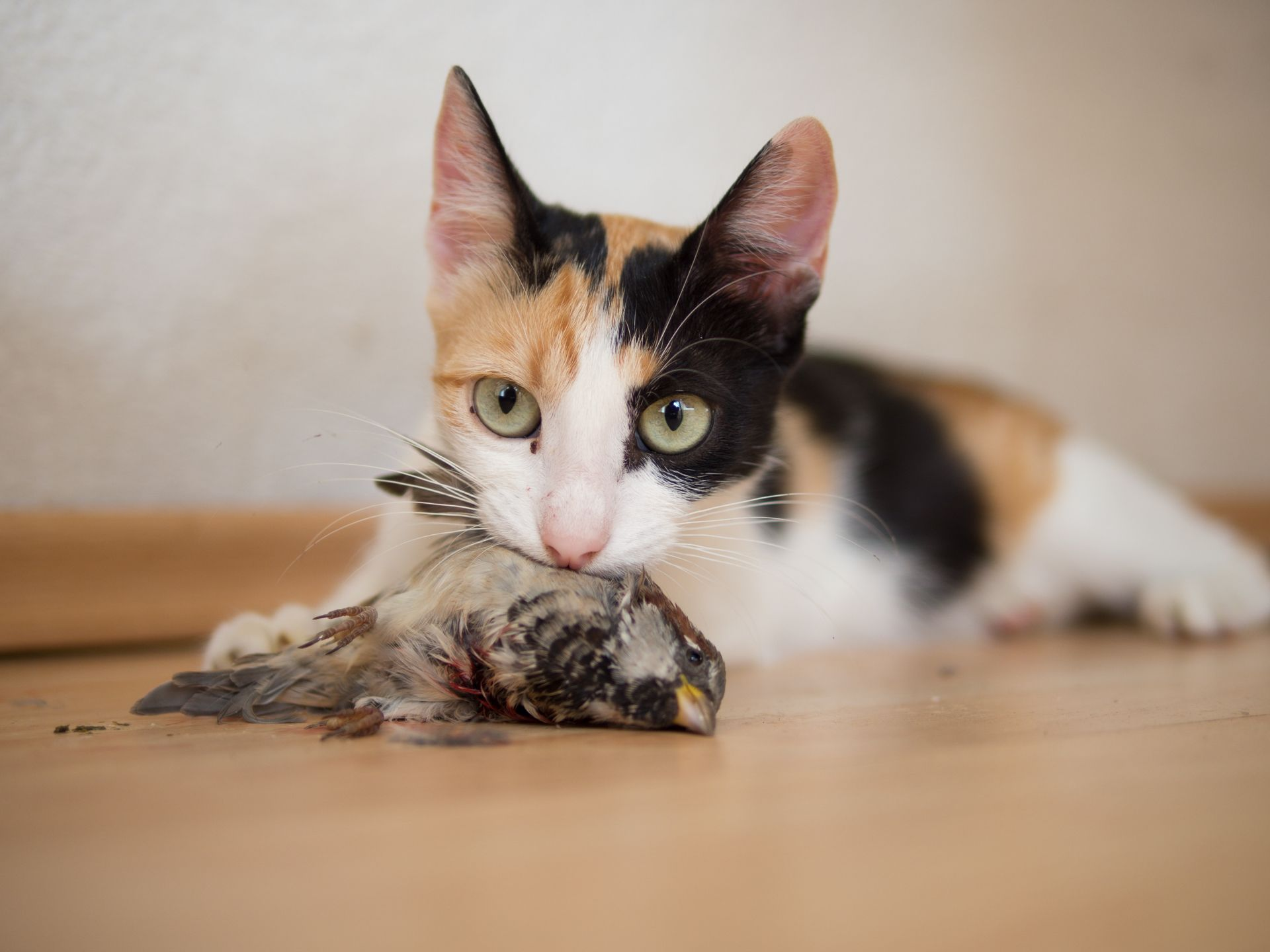 Cat Holding A Caught Bird In Its Mouth Cats Animals Bird
