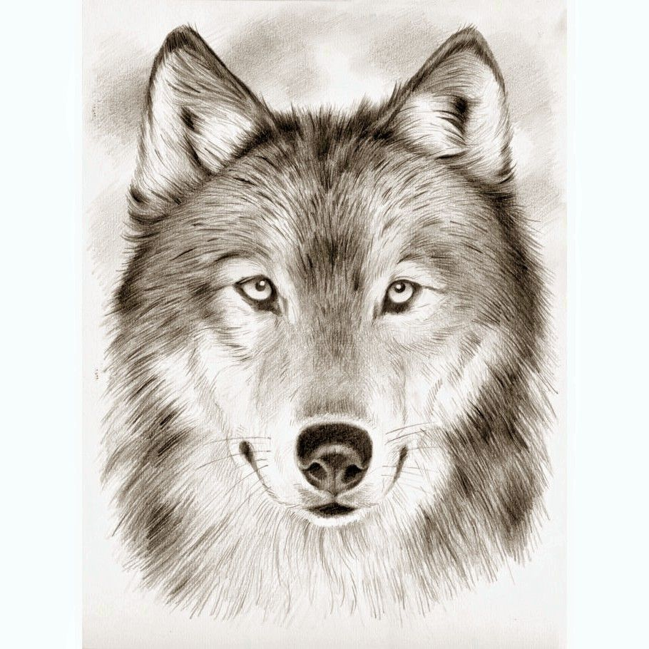pin by christina b on drawing loup dessin images loup tatouage loup. Black Bedroom Furniture Sets. Home Design Ideas
