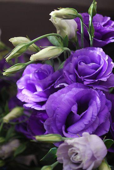 lisianthus violett lila lila blumen blumen und lila farbe. Black Bedroom Furniture Sets. Home Design Ideas