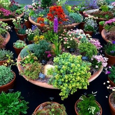 your pots 25 inspiring  practical ideas for container gardens  The MiddleSized Garden  Plant alpines and sempervivums in shallow containers Love your pots 25 inspiring  p...