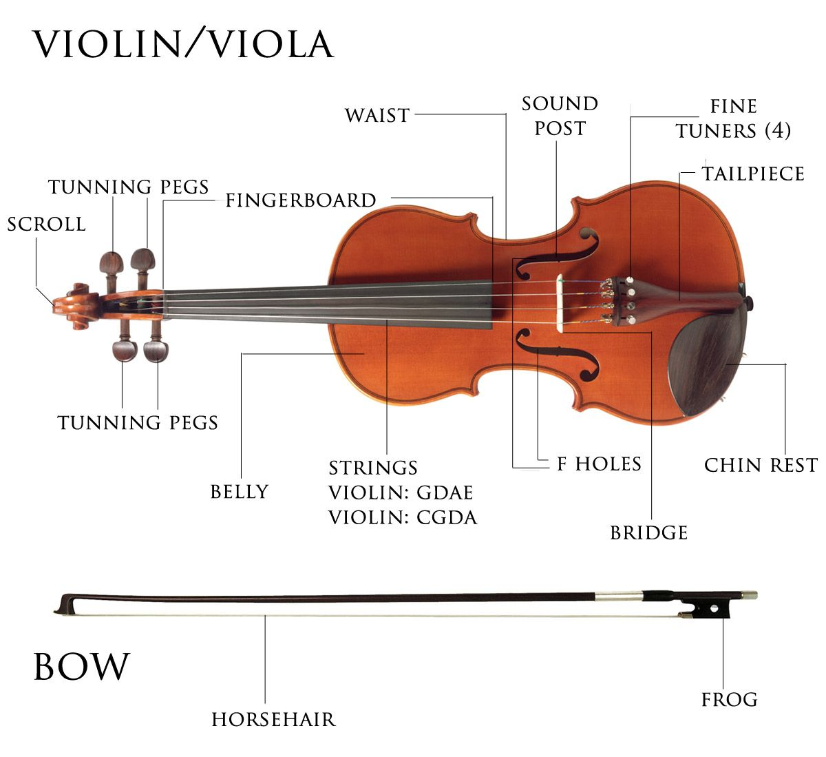 violin parts illustration | Teaching tools | Pinterest ...
