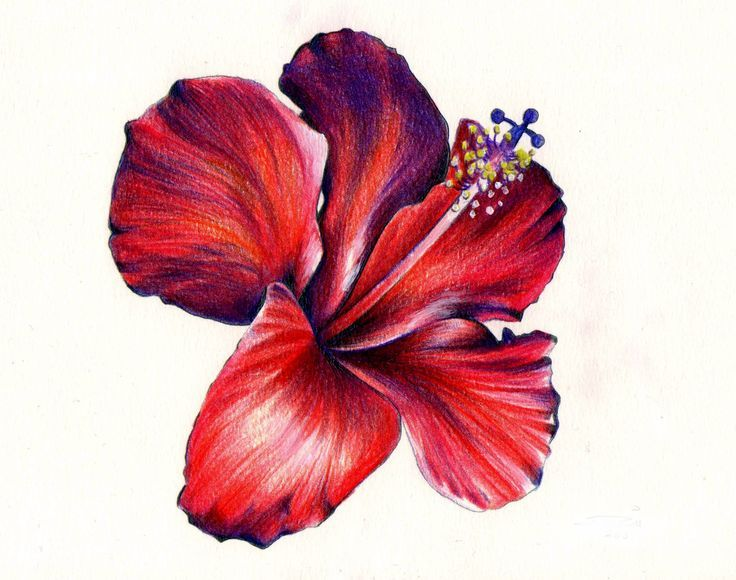Colored Pencil Drawing Of Flower