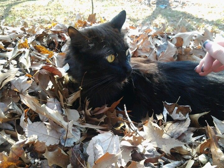 Darby in leaves