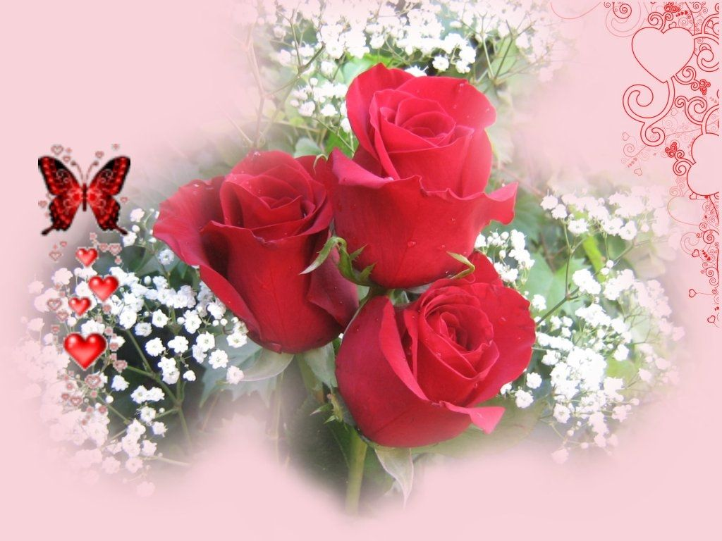 Images Of Love Roses HD