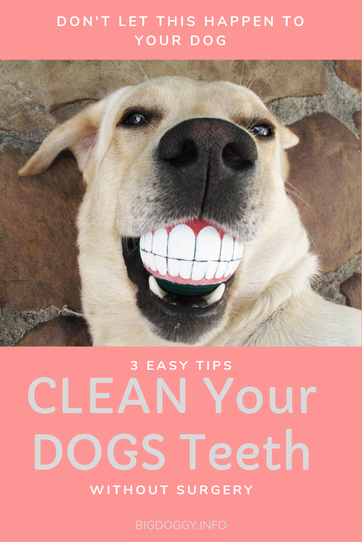 If Your Dog Has Stinky Breath Brown And Yellow Teeth Or Bleeds When They Chew On Their Toys You Need To Read This I M Dog Care Dog Teeth Care Dog Care