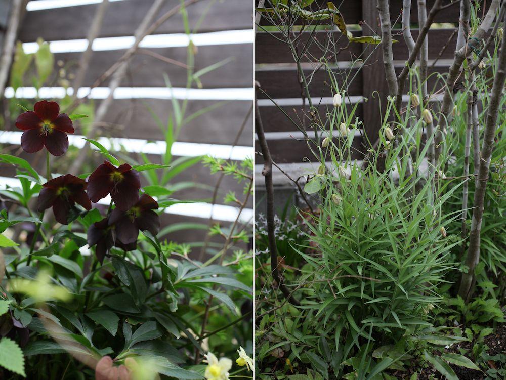私の庭 私の暮らし 家を囲む小径を庭に 神奈川県 飯田邸 庭 植物